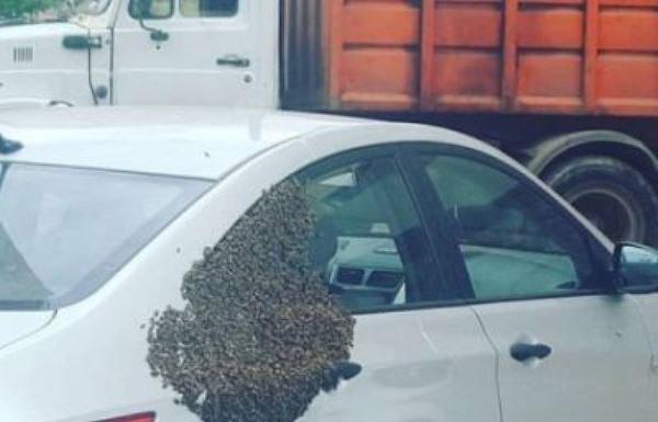 Рой пчел атаковал автомобиль в Павшинской пойме