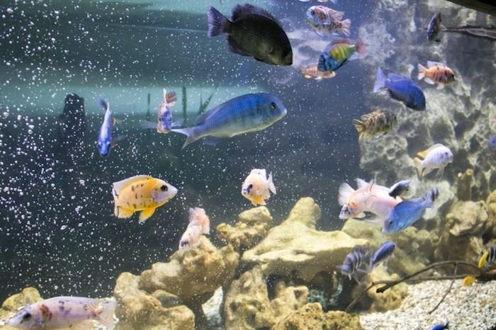 Крокус сити океанариум открывает свои двери
