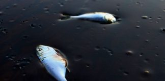 В Москве-реке возле Павшинской поймы обнаружены нефтепродукты