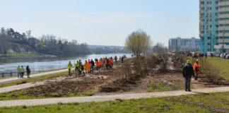 Сосновый лес и сиреневую аллею высадили в Красногорске в рамках акции «Лес Победы»