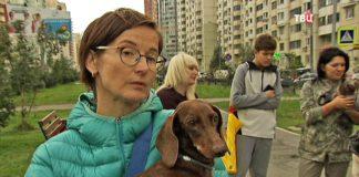 В Павшинской пойме активизировались догхантеры: погибли шесть собак