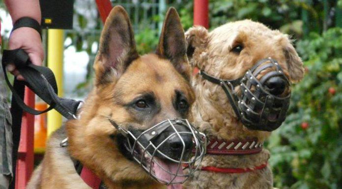 В Павшинской пойме провели проверку соблюдения правил выгула собак