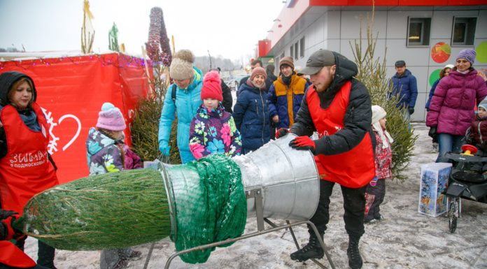Первый подмосковный ёлочный базар открыли в Павшинской пойме